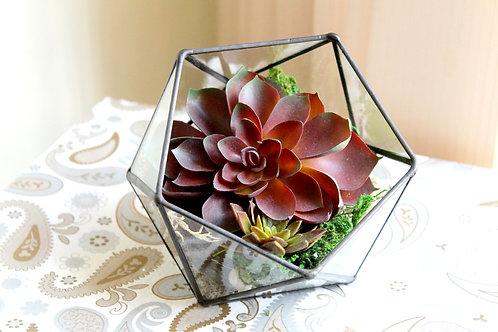 флорариум, флорариум эхеверия, флорариум искусственные растения, флорариум искусственные суккуленты, флорариум икосаэдр,