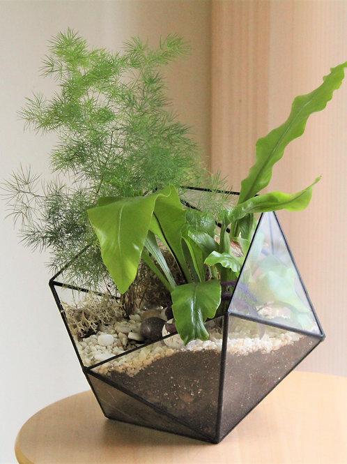 флорариум с папоротником, флорариум , подарок флорариум, большой террариум флорариум, флорариум купить спб, мини сад,