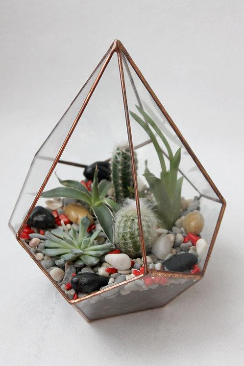 флорариум, флорариум купить, флорариумы спб, геометрический флорариум, подарки, флорариум на заказ, флорариум с суккулентами,