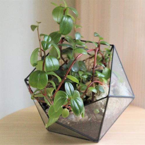 флорариум с ракушками, флорариум с аспарагусом, флорариум с декоративнолистными растениями, террариум, мини садик