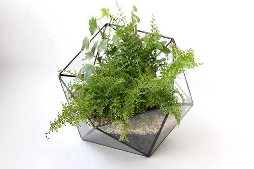 флорариум, флорариум цена, флорариум фото, мини-сад, флорариум зеленый, флорариум с папоротником, флорариум хедра, флорариум