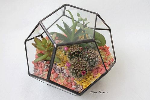 геометрический флорариум, флорариум, флорариум додекаэдр, флорариум купить спб