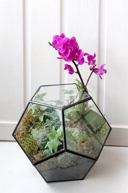 флорариум с розовой орхидеей фаленопсис