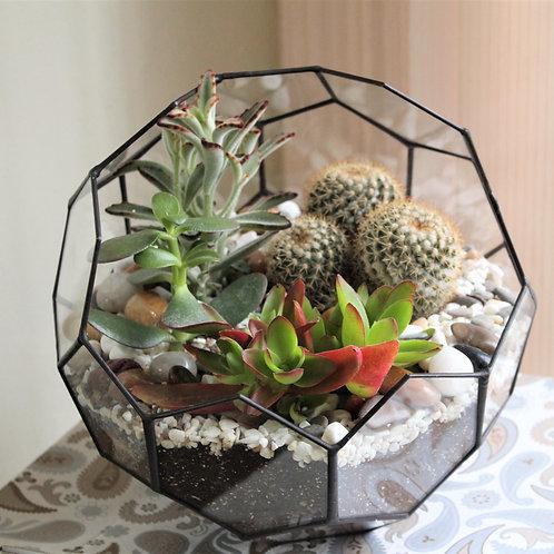 необычный флорариум, флорариум мяч, флорариум с суккулентами эхеверией купить в спб, terrarium, succulents, florarium, сад