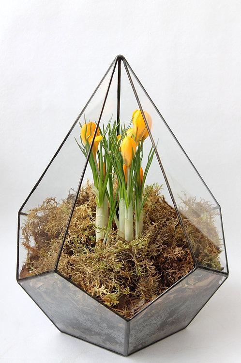 весенний флорариум, флорариум с желтыми цветами, флорариум с первоцветами, флорариум, флорариум спб