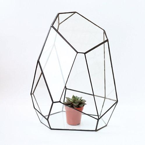 Орхидея. Флорариум геометрический для растений и суккулентов