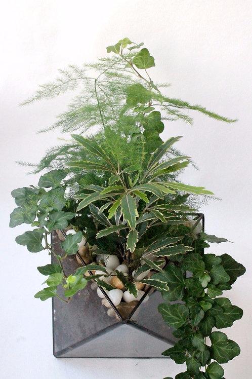 Флорариум Октаэдр с аспарагусом, шеффлерой и плющом, грань 15 см