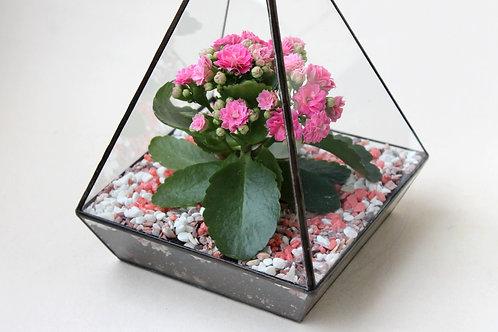 ПОДАРОК НА 8 МАРТА! Флорариум Пирамида с розовым Каланхоэ, высота 23 см