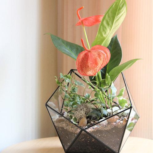 флорариум, флорариум с цветами, террариум, купить флорариум спб, купить флорариум в санкт-петербурге, флорариум купить,