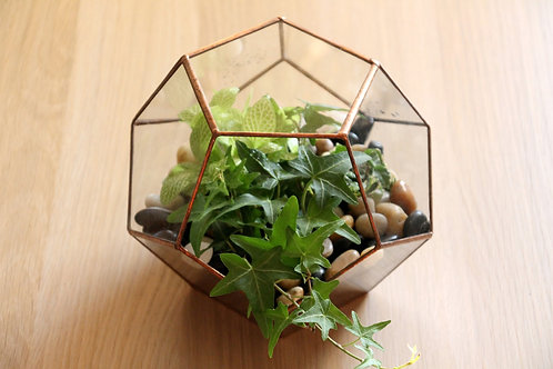 флорариум, флорариум с растениями, флорариум фиттония