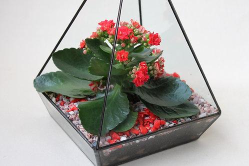 красный флорариум, флорариум с красным цветком, флорариум на праздник, подарок на 8 марта флорариум