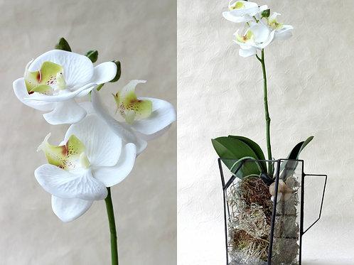 Флорариум с искусственной орхидеей. Кувшин. Орхидариум