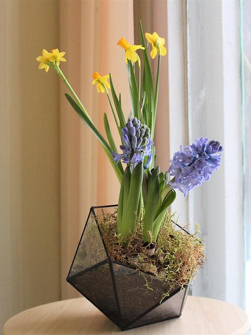 флорариум с первоцветми, флорариум спб купить, флорариум с гиацинтами и нарциссами, террариум с растениями, мини садик