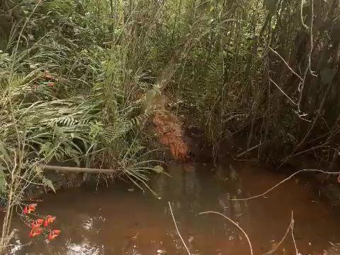 Como o fluir de um rio