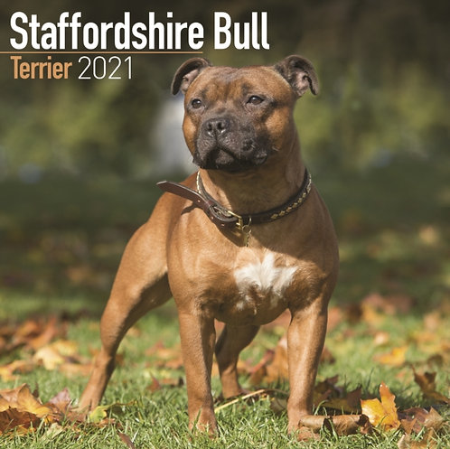 Staffordshire Bull Terrier 2021 Wall Calendar