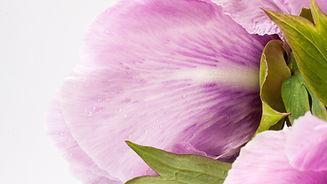 крупный план цветы