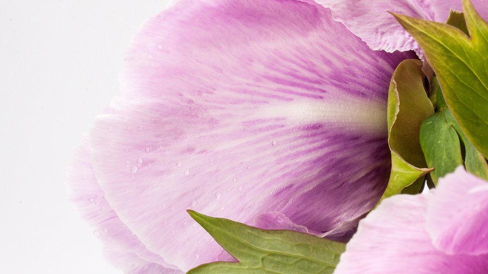 close up Blumen