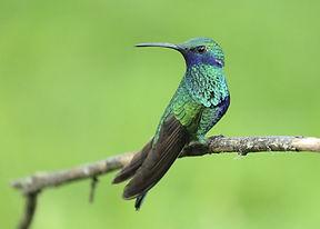 hummingbird-1068370_1280-1280x914.jpg