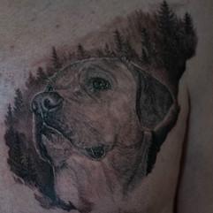 Dog portrait I made couple of days ago.