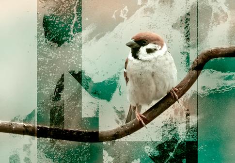 bird2b.png