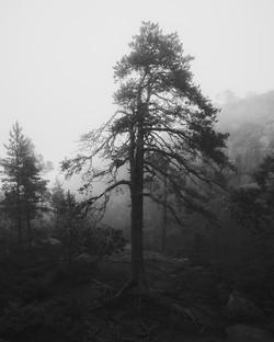 natur2_av_HeliBerg