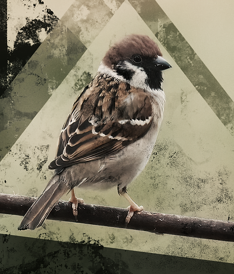 bird1b.png