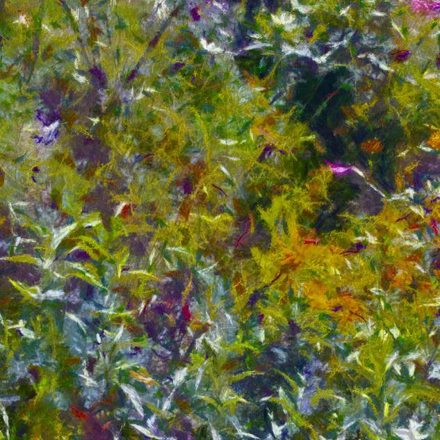 FleursDesChamps5 copie.jpg