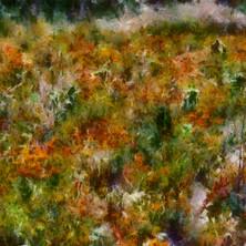FleursDesChamps10.jpg