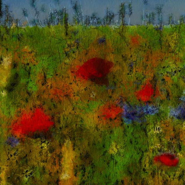 FleursDesChamps1 copie.jpg