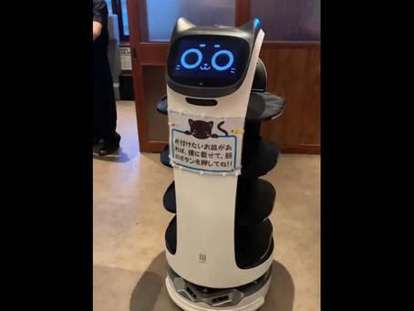 配膳ロボット「Bellabot」焼肉の和民 大鳥居駅前店様にて実証実験