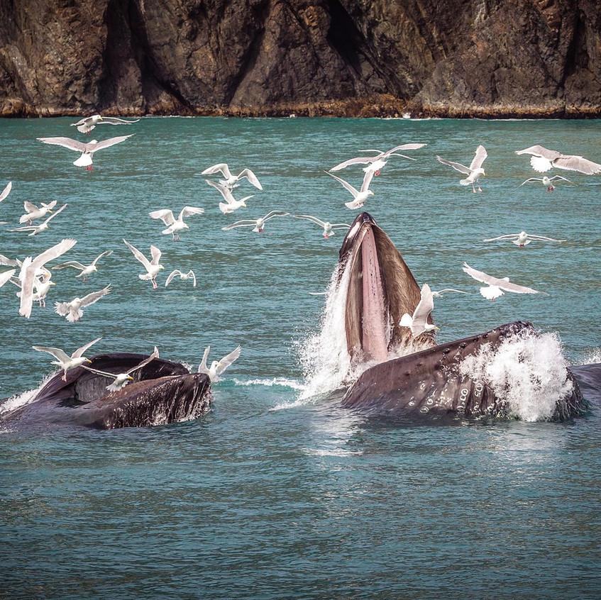 humpback-whale-3928551_1280