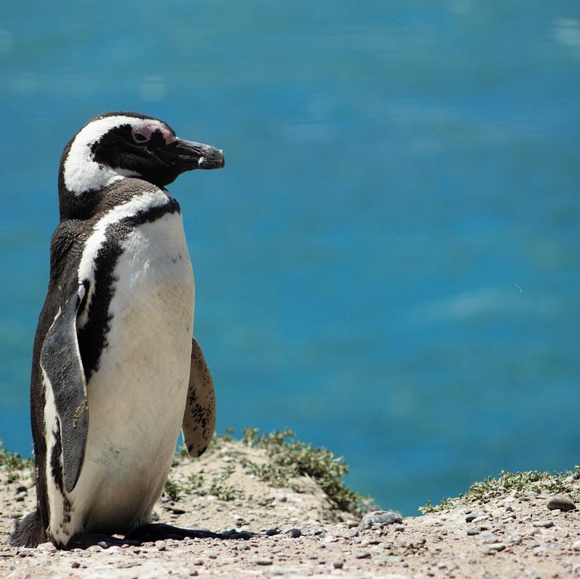 penguin-4285650_1280
