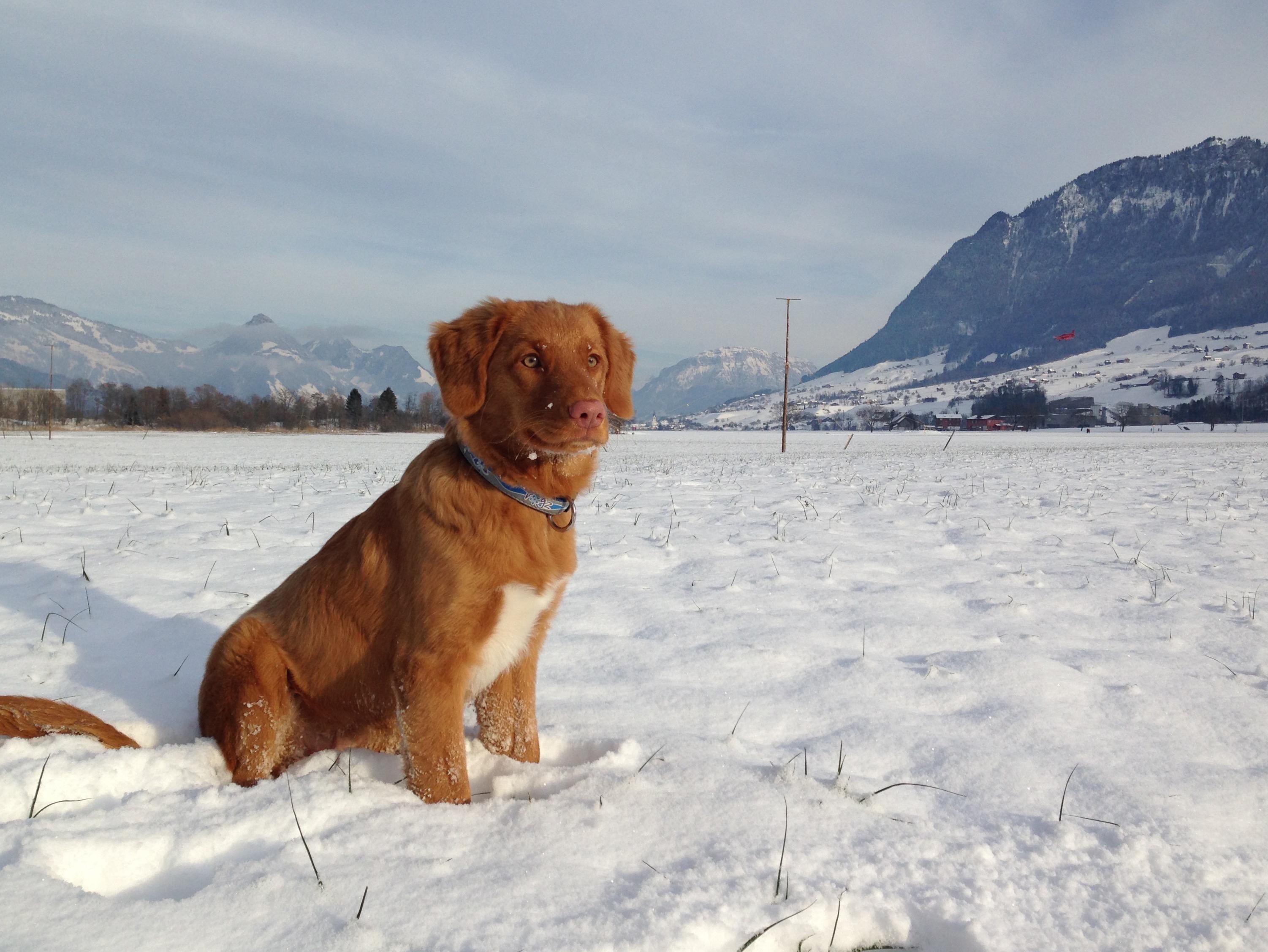 Eli im Schnee
