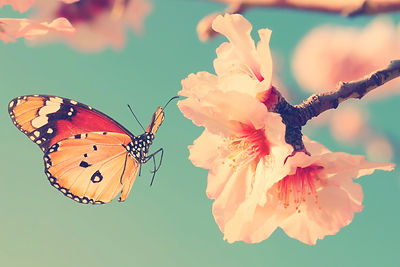 Vintage%20spring%20image%20with%20butterfly%20and%20blossoming%20fruit%20tree%20against%20blue%20sky