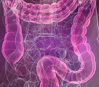 HRP Leaky Gut Image.png