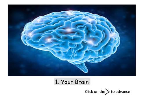 Brain Revival - Fix or Optimize Brain Health