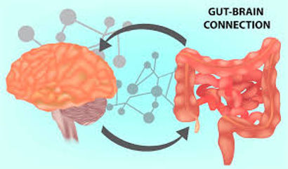 HRP brain gut connection2 IMAGE.jpeg