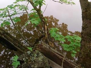 Suvun salaisuudet näkyvät sukupuussa