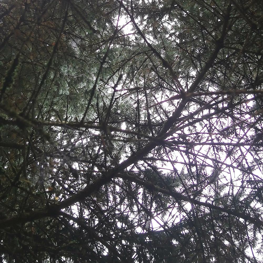 Sukupuu - oma tausta näkyville