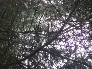 Sukupuu – oma tausta näkyville