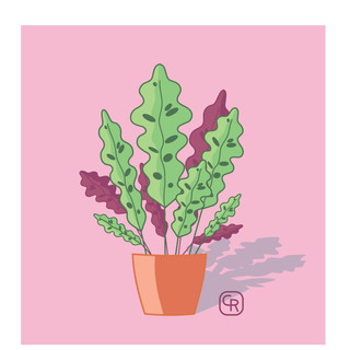homeplant like heartplant jpeg rgb-08.jpg