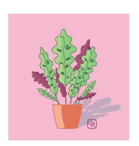 Home Plant 1