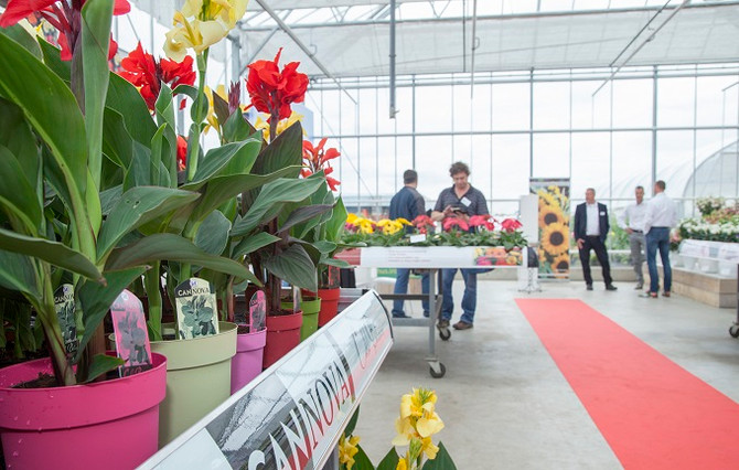 Cannova at FlowerTrials'17