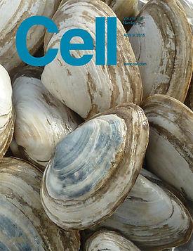 2015 Cell_x4.jpg