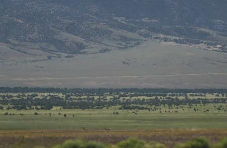 Swamp Cedars Protection Bill Heard By Nevada Legislative Committee