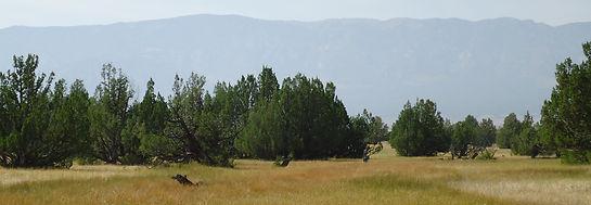 Swamp Cedars.jpg