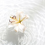White flower in water-IMG_20200303_19102
