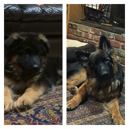 9 weeks and 6 months