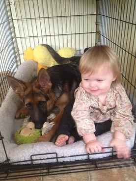 European German Shepherd Dogs puppy and child