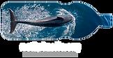 n2p_business_dolphin_fordarkbg_600x308.p